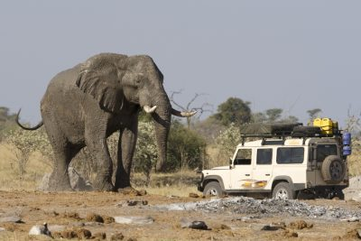 A large Africa elephant standing in front of a Serengeti safari cruser