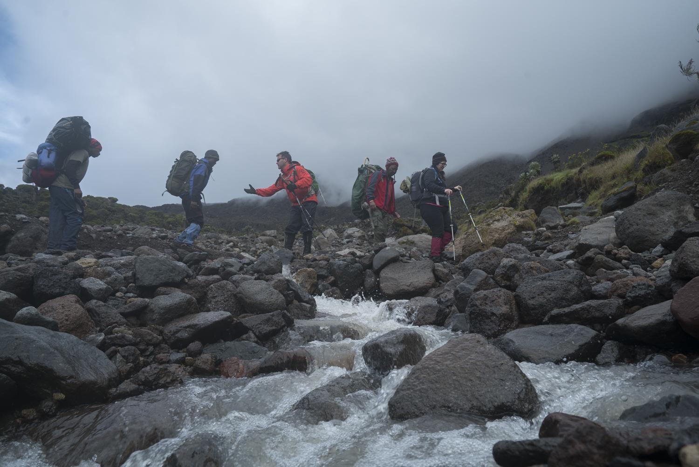 Hikers in the Dendrosenecio kilimanjari woodlands.