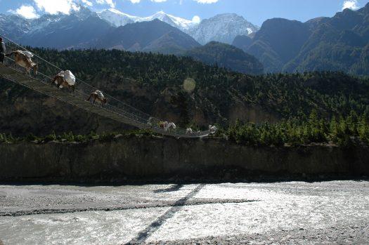 A think footbridge on the Annapurna Circuit
