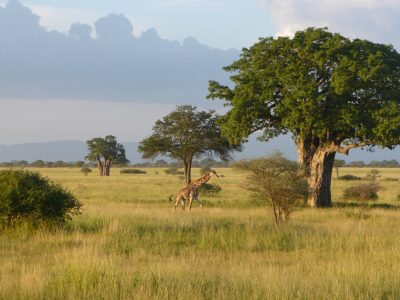 Save the Serengeti: Scientists chime in